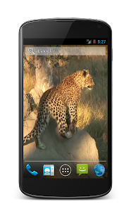 Leopard Free Video Wallpaper- screenshot thumbnail