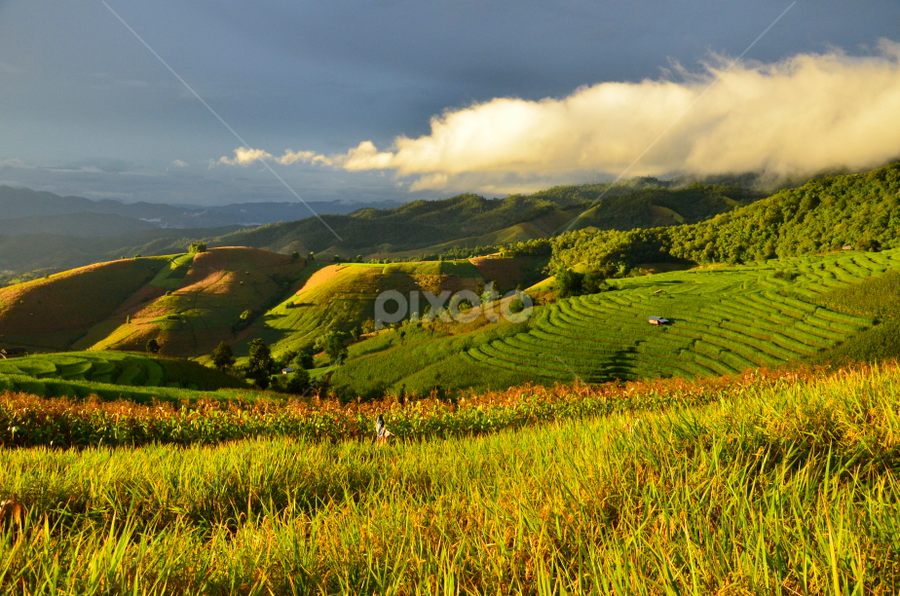 Step rice field in the  north of Thailand. by Pornravee Poocharoen - Landscapes Mountains & Hills ( pornravee@hotmail.com )