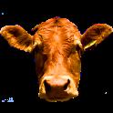 CowCam icon