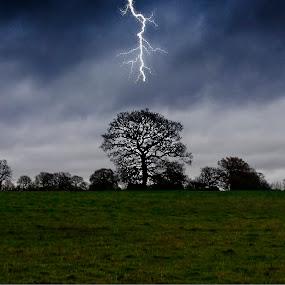 Lightning Tree by Andrew Robinson - Digital Art Things ( lightning, oak, oak tree )