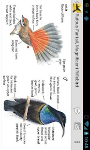 Morcombe's Birds of Aus (Lite) - screenshot thumbnail