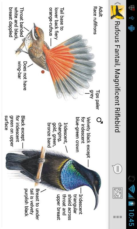 Morcombe's Birds of Aus (Lite) - screenshot