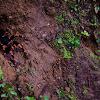 Red-Kneed Tarantula