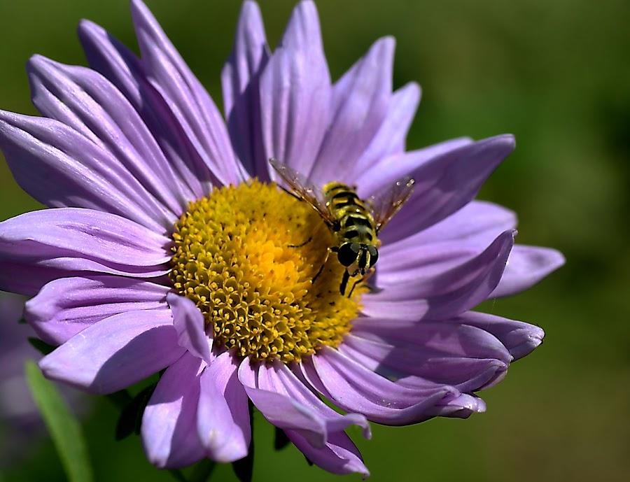 by Iztok Urh - Flowers Flower Gardens