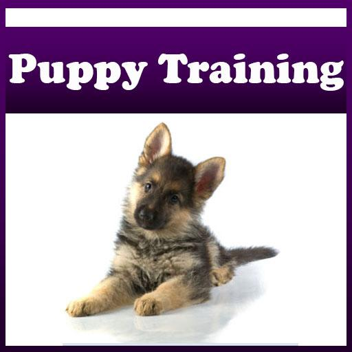 So You Want to be a Dog Trainer!