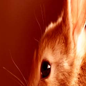 Color Bunny LWP Pro
