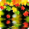 3D Maple Leaf Live Wallpaper icon