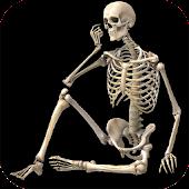 Skeletal System (Anatomy)
