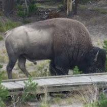 north dokota wildlife