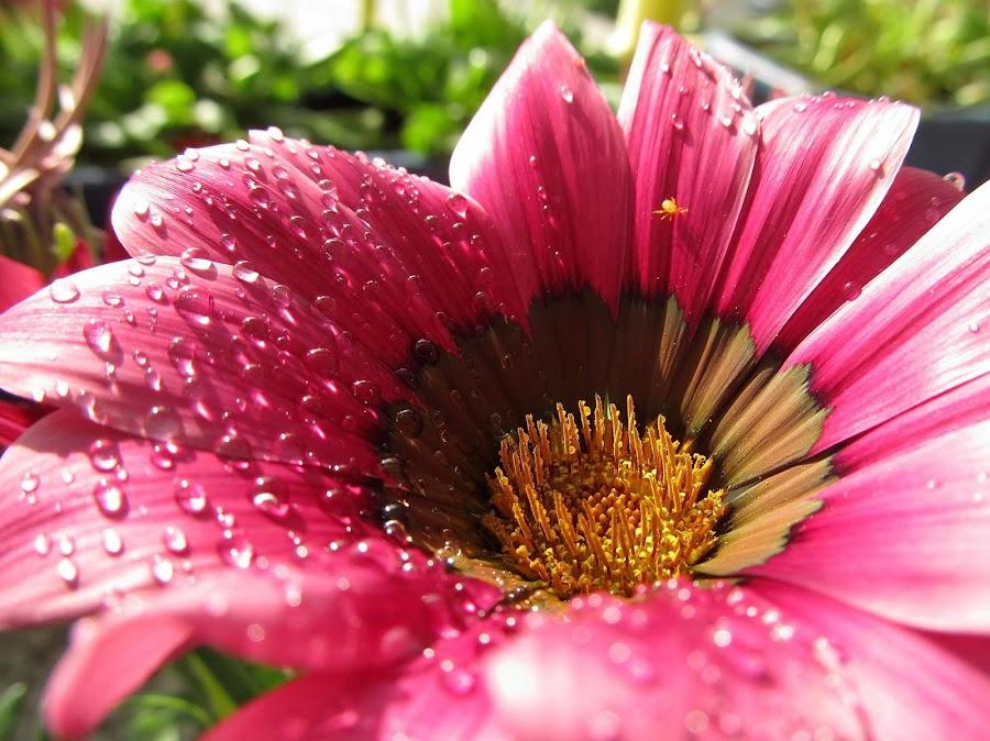 by Ljiljana Pejcic - Flowers Flower Gardens