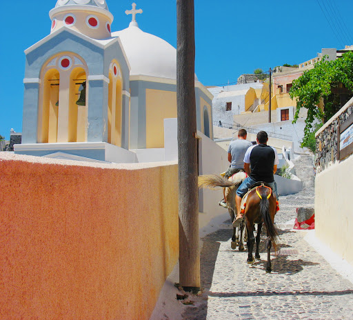 donkeys-Santorini-Greece - The famous donkeys of Santorini carry visitors from the small port up the steep path to the town of Fira.