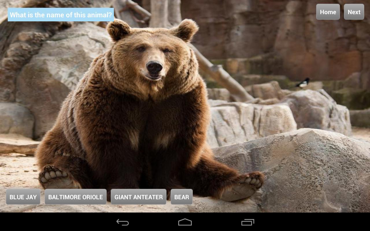 Animals at Zoo- screenshot