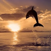 3D happy dolphin HD LWP