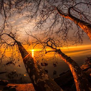 low tree_.jpg