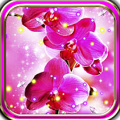 Best Orchid HD live wallpaper