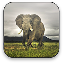 Elephant Free Video Wallpaper icon