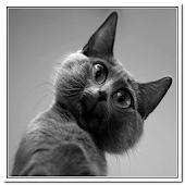 Cat Sounds Joke