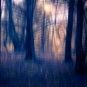 Blur by Drew Backues - Digital Art Abstract ( abstract, blue, forest, blur, woods )