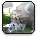 Little Puppy Video Wallpaper icon