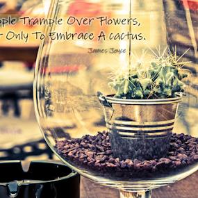 Cactus  by Luana Racan - Typography Quotes & Sentences ( cactus glass croati rovinj boats sea quotes sentences )