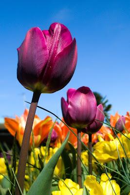 fleursbotanique-3.jpg