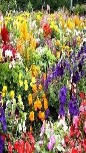 Cookes Gardens