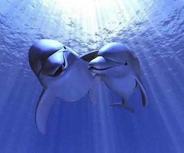 玩娛樂App|3D Dolphin免費|APP試玩