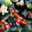 Koi Fish HD Wallpaper icon