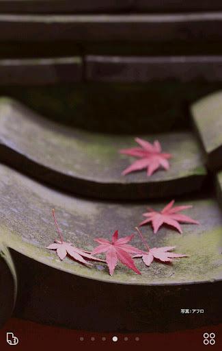 無料个人化Appの紅葉、日本の秋【壁紙画像 無料きせかえ】buzzHOME|記事Game