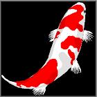 Koi Story - Part 1 icon