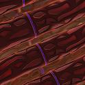 Cell Membrane Potential icon