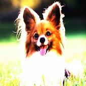 3D cute dog 88
