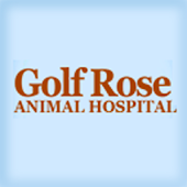 Golf Rose