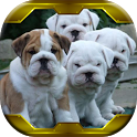 Wallpapers Live Bulldogs Puppy icon