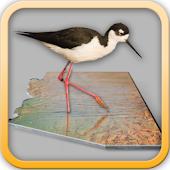 101+ Birding Sites - Phoenix