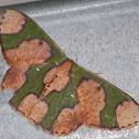 Camo moth