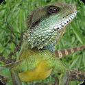Complete Iguana Survival Guide logo