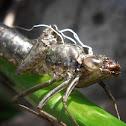 Dragonfly, exuvia