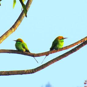 NO LOVE by Suman Mukherjee - Animals Birds ( love, tree, nature, green, weather, birds )