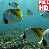 Tropical Fish Underwater Live