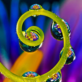 Drops withh passion flower by David Winchester - Nature Up Close Natural Waterdrops (  )