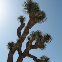 Joshua Tree National Park Biodiversity