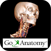 Go Anatomy- Head, neck & brain