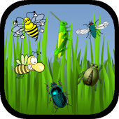 Bug Catcher Games