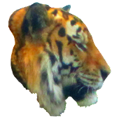 Tiger Profile Sticker