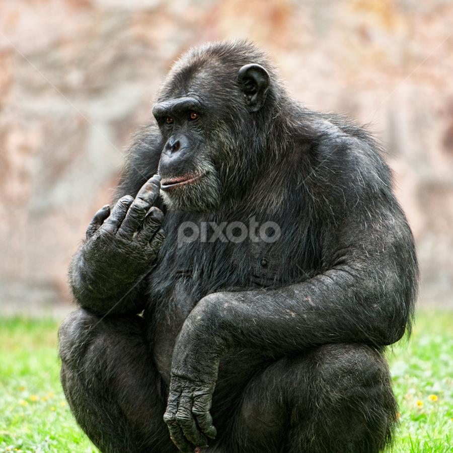 Monkey by Cristobal Garciaferro Rubio - Animals Other Mammals