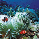 Seabed  Live Wallpaper logo