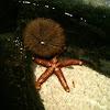 Sea Urchin & Starfish