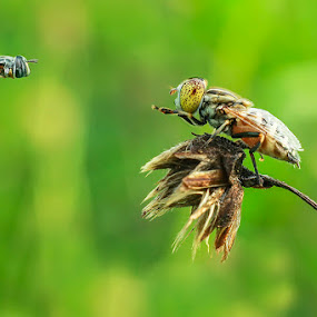 Hey.. Where Are You Going by Abdul Aziz - Animals Insects & Spiders ( canon, macro, fly, insect, animal )