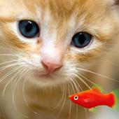 KITTY & FISH LIVE WALLPAPER(6)